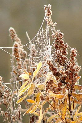 Photograph - Frozen Web by Frank Townsley