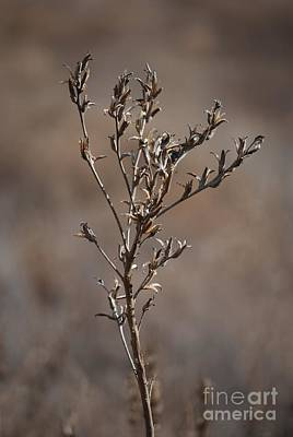 Photograph - Frozen Weed by Mark McReynolds