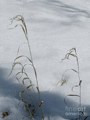 Photograph - Frozen Wheat by Mary Mikawoz