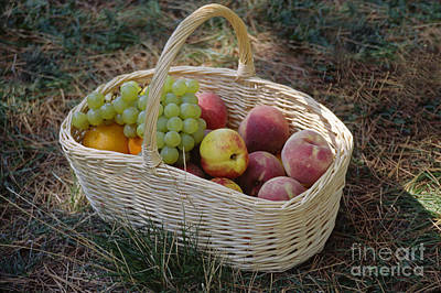Photograph - Fruit Basket Provence France by Craig Lovell