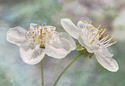 Photograph - Fruit Blossoms by David and Carol Kelly