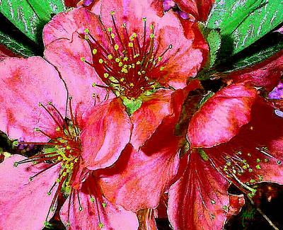 Photograph - Fruit Blossoms by Michele Avanti