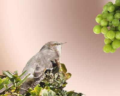 Mockingbird Digital Art - Fruit For A Catbird by Richard Smith