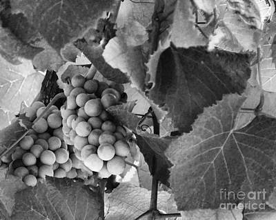 Photograph - Fruit -grapes In Black And White - Luther Fine Art by Luther Fine Art