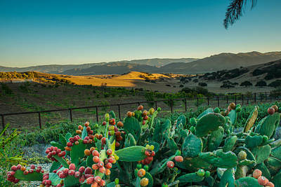 Photograph - Fruit Of The Cactus by Paul Johnson