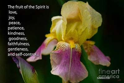 Photograph - Fruit Of The Spirit by Sandra Clark