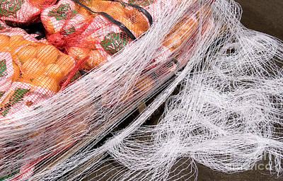 Netting Digital Art - Fruit Pallet by Glenn Morimoto