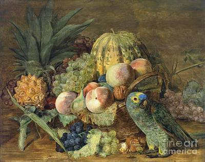 Amazon Parrot Painting - Fruit Still - Life With Amazon Parrot by Pg Reproductions