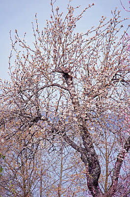 Photograph - Fruit Tree Overlooking Puget Sound by Tikvah's Hope