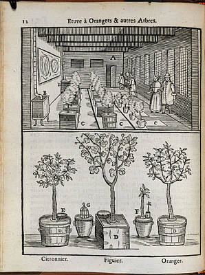 Hothouses Photograph - Fruit Trees by British Library