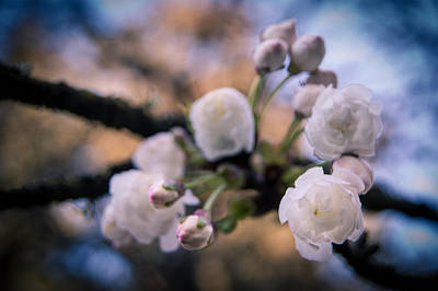Photograph - Fruitful Beginnings by Jen Baptist