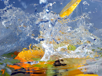 Blue Grapes Photograph - Fruits And Water by Sinisa Botas
