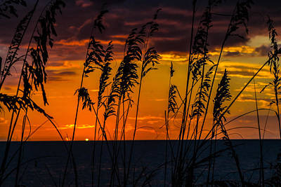 Photograph - Ft. Myers Sea Oats by Shannon Harrington