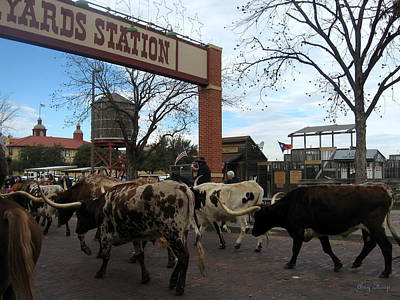 Cattle Drive Photograph - Ft Worth Trail Ride At Ft Worth Stockyard by Amy Hosp