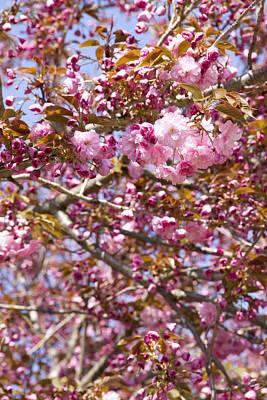 Ashlee Meyer Photograph - Fuchsia Blossoms by Ashlee Meyer