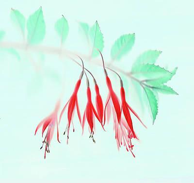 Petals Photograph - Fuchsia by Brian Haslam