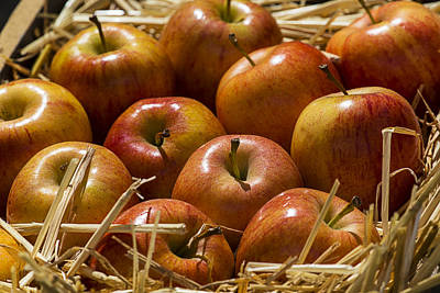 Apple Photograph - Fuji Apples by Garry Gay