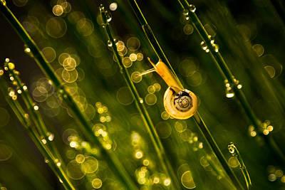 Snail Photograph - Fukushima 2020 by