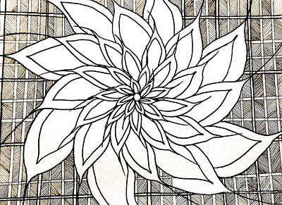 Drawing - Full Bloom Iv  by Anita Lewis