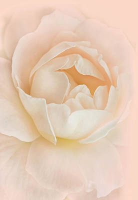 Photograph - Full Bloom Peach Rose Flower by Jennie Marie Schell