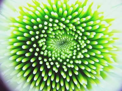 Full Frame Shot Of Beautiful Flower Art Print by Alyssa Stasiukonis / Eyeem
