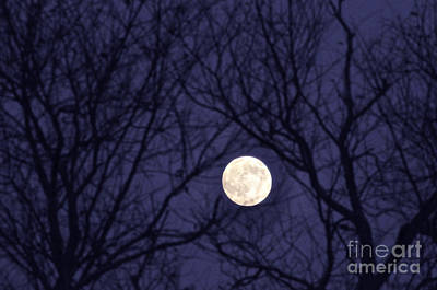 Allegheny Mountains Photograph - Full Moon Bare Branches by Thomas R Fletcher