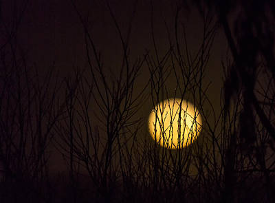 Full Moon Behind The Trees Print by Angela A Stanton