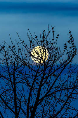 Moon Photograph - Full Moon by Bob Orsillo