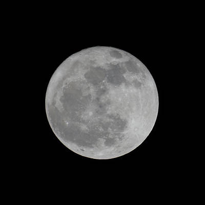 Photograph - Full Moon Feb by Ernie Echols