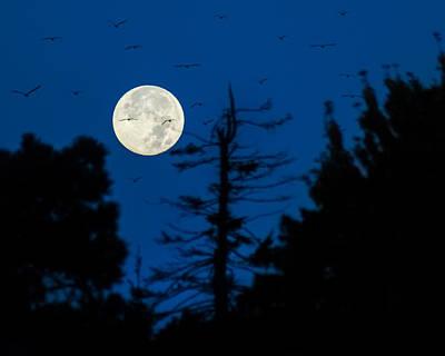 Photograph - Full Moon Flightpath by Bill Pevlor