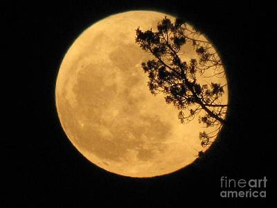 Photograph - Full Moon by Michele Penner