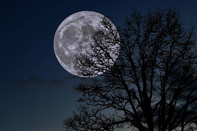 Art Print featuring the photograph Full Moon Rising by Dennis Bucklin