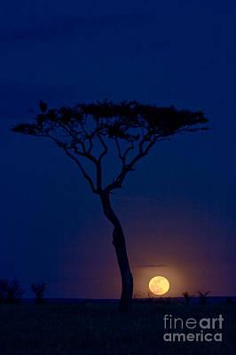 Photograph - Full Moon Rising Over Masai Mara by Gregory G Dimijian MD