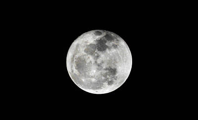 Photograph - Full Moon by Shey Stitt