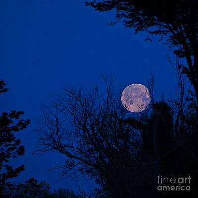 Photograph - Full Moon With Trees by Byron Varvarigos