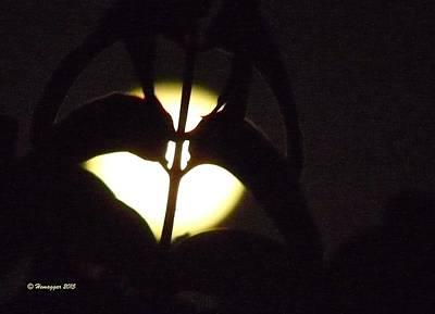 Photograph - Valentine Moon by Hemu Aggarwal
