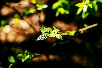 Greenery Photograph - Full Of Life 12 by Yevgeni Kacnelson
