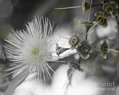 Photograph - Full Of Promise by Kerryn Madsen-Pietsch