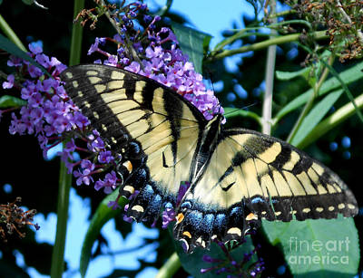 Whiteoaks Photograph - Full View Of A Butterfly by Eva Thomas