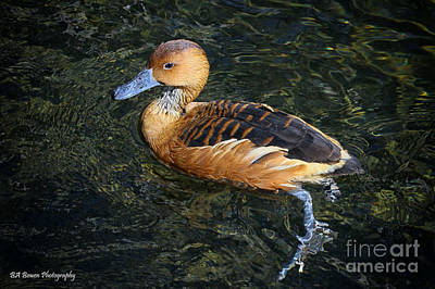 Photograph - Fulvous Whistling Duck by Barbara Bowen
