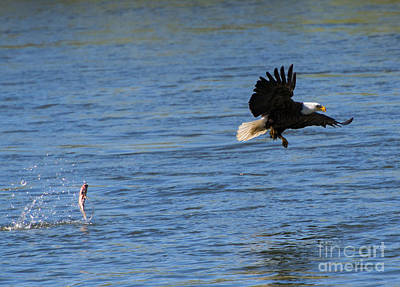 Eagle Photograph - Fumble by Mike Dawson