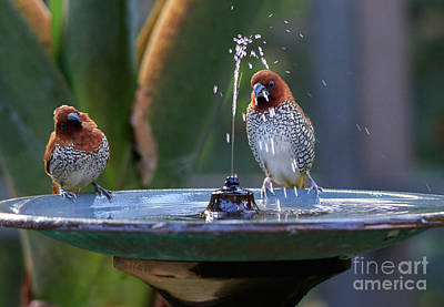 Mannikins Photograph - Fun In The Fountain by Louise Heusinkveld