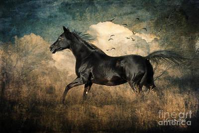 Running Horses Photograph - Fun To Run by Karen Slagle