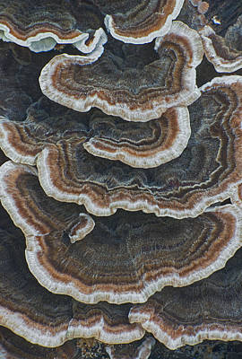 Photograph - Fungal Canyon by Jim Zablotny