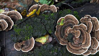 Fungi Contrast Art Print