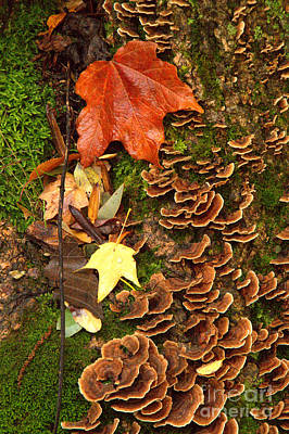 Art Print featuring the photograph Fungi by Jim McCain