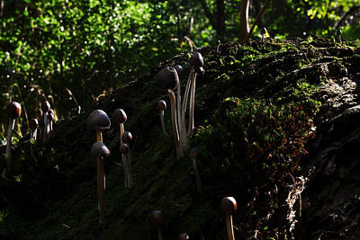 Photograph - Fungi Village by Beverly Cash