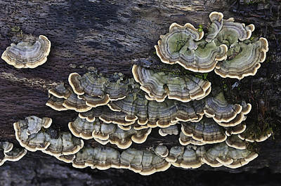 Photograph - Fungus Among Us by Sherri Meyer