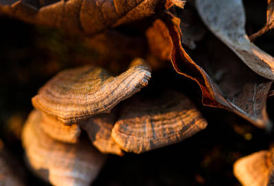 Photograph - Fungus And Leaves by Haren Images- Kriss Haren