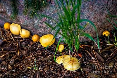 Halloween Movies - Fungus by Jon Burch Photography
